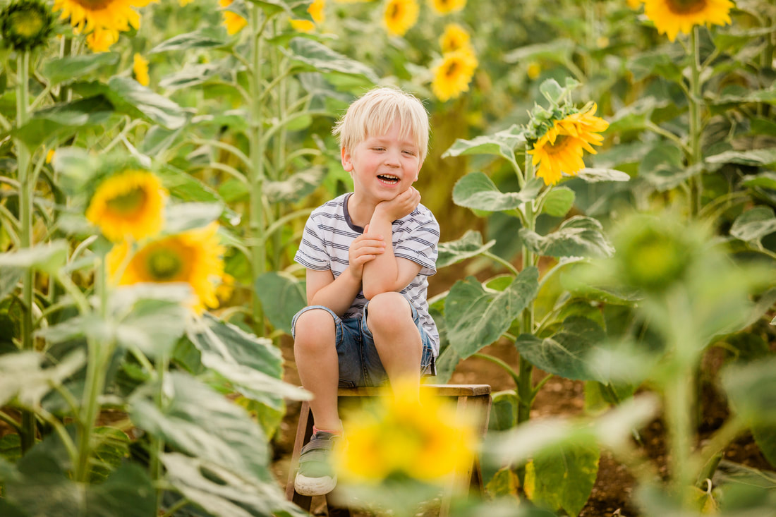 Picture of blond boy amongst sunflowers at Writtle Sunflowers in Essex